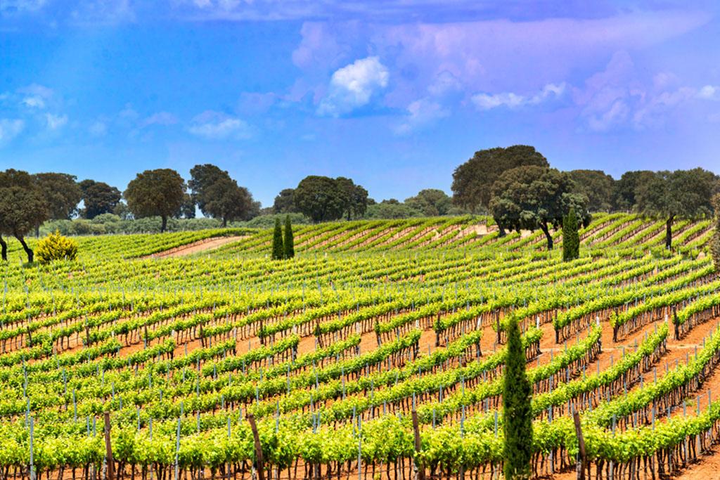 Castilla-La Mancha, Spain: living history... but so much more
