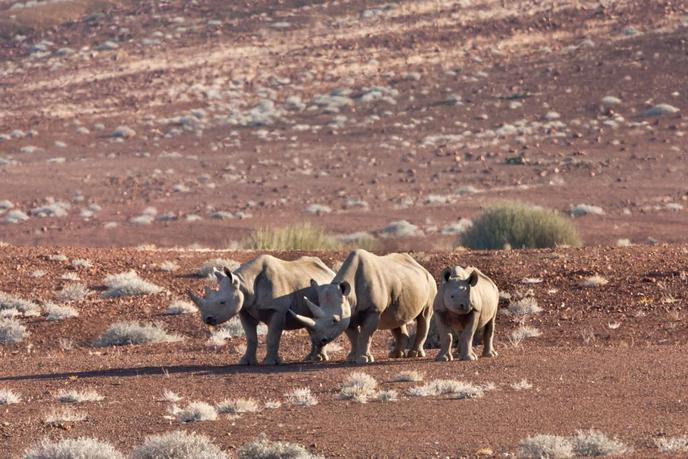 MKOMAZI NATIONAL PARK IN TANZANIA DEDICATED TO RHINOCEROS TOURISM